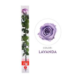 Rosa Preservada Acrílica Lavanda Tallo Largo