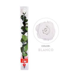 Rosa Preservada Acrílica Blanca Tallo Largo