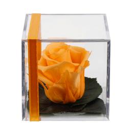 Rosa Preservada Melon en Cubo Acrílico