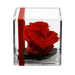 Rosa Preservada Roja en Cubo Acrílico