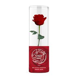 Rosa Preservada Roja Short 100% Natural