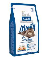Cat indoor monty