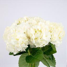 Hortensia blanca 5 un