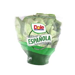 Lechuga Española Hidroponica