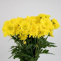 Maule amarillo 10 un