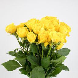 Minirosas amarillas 10 un