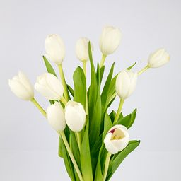 Tulipán blanco 10 un