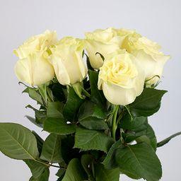 Rosas blancas 10 un